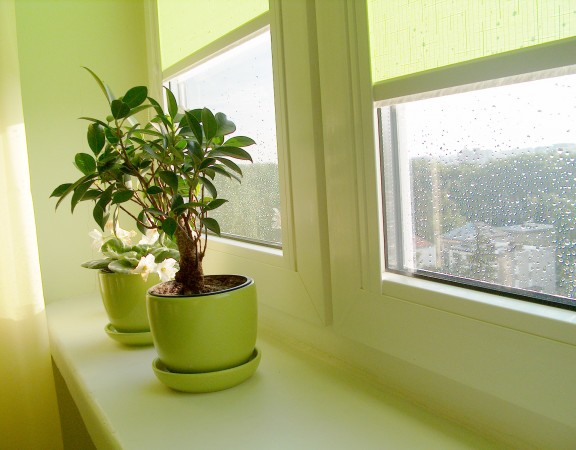 plant_on_sill